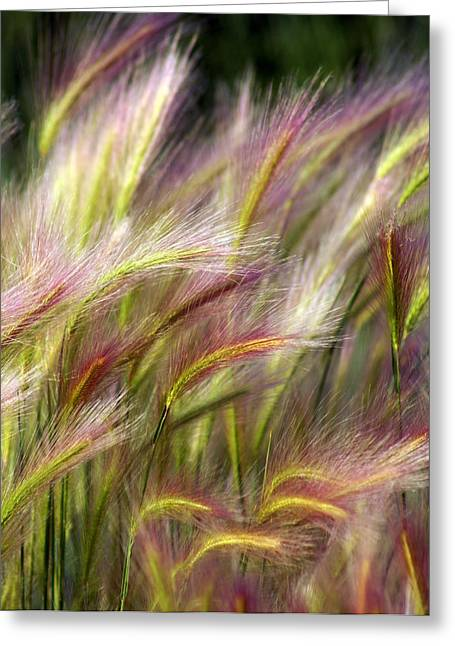 Plant Greeting Cards - Tall Grass Greeting Card by Marty Koch