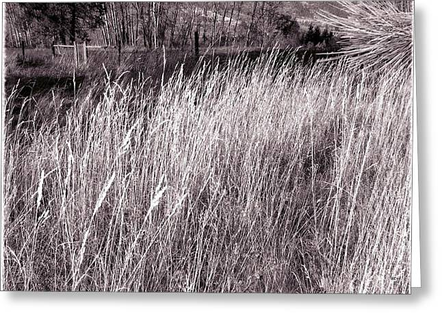 Tall Grasses Greeting Card by Will Borden