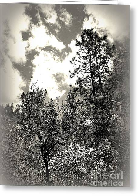 Tall Trees In Lake Shasta Greeting Card by Garnett  Jaeger