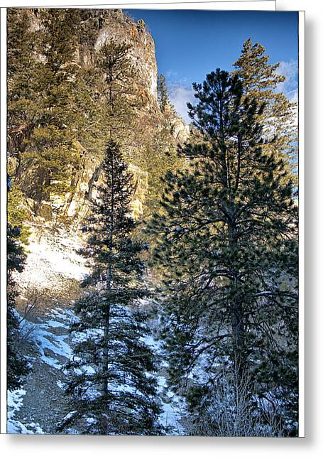 Greeting Cards - Tall Trees Greeting Card by Lisa  Spencer