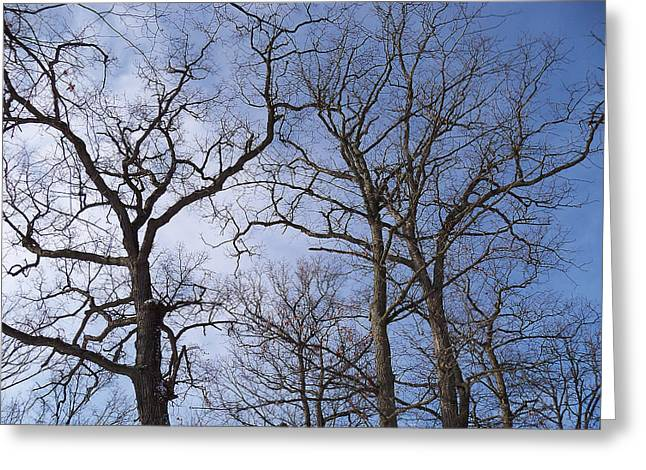 Mohawk Park Greeting Cards - Tall Trees Reaching for a Blue Sky Greeting Card by Corinne Elizabeth Cowherd