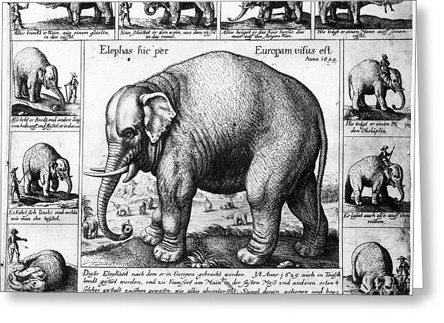 Tame Elephant, 1629 Greeting Card by Granger