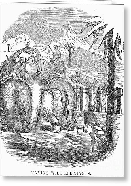 Tamer Greeting Cards - Taming Wild Elephants Greeting Card by Granger