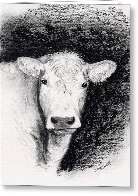 Steer Drawings Greeting Cards - Tan Steer Greeting Card by Sherri Strikwerda