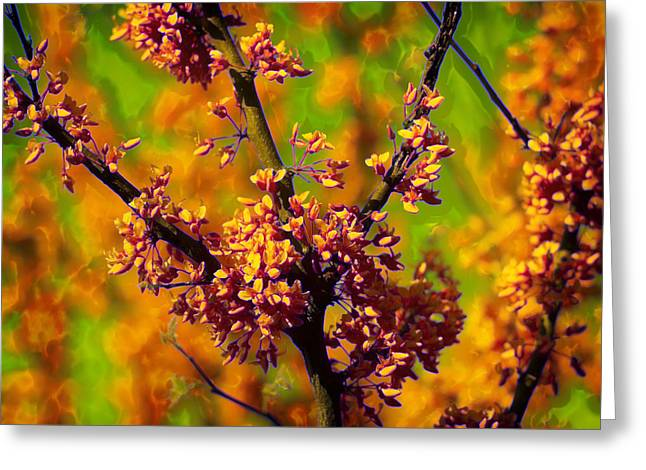 Cercis Greeting Cards - Tangerine Bloom Delight Greeting Card by Bill Tiepelman