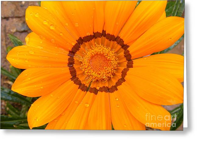 Tangerine Greeting Cards - Tangerine Sun Greeting Card by Kara Kincade
