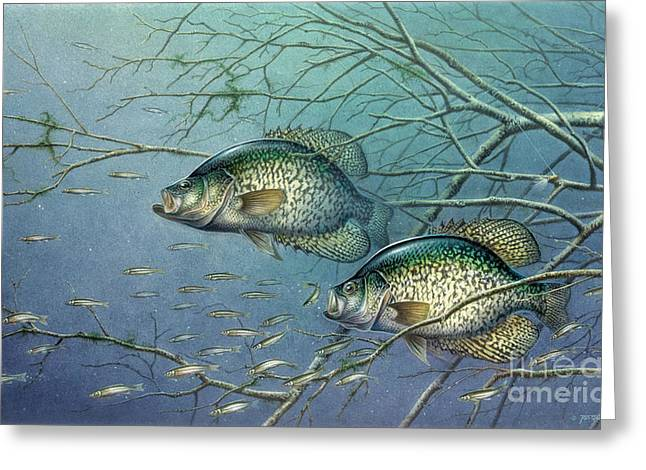 Panfish Greeting Cards - Tangled Cover Crappie II Greeting Card by Jon Q Wright