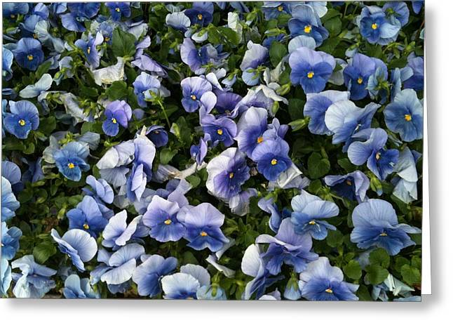 Tangled Up In Blue Greeting Cards - Tangled Up In Blue Greeting Card by Shawn Hughes