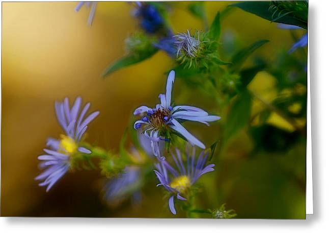 Tangled Up In Blue Greeting Card by Susan Capuano