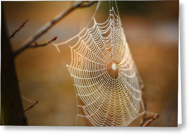 Tangled Web Greeting Card by Brenda Bryant