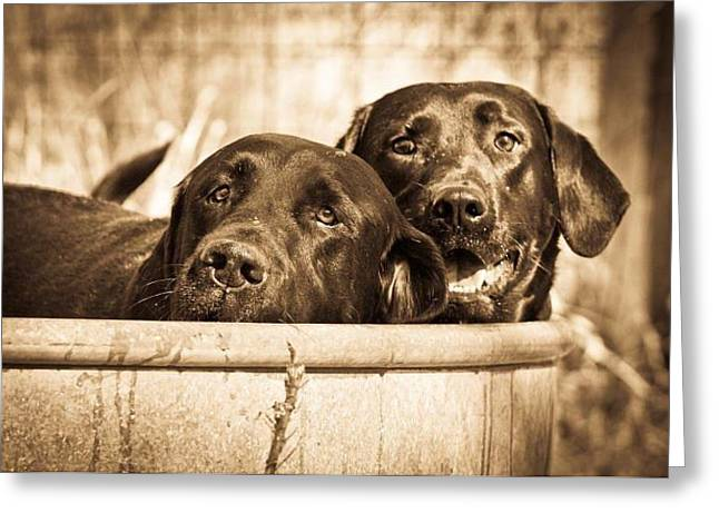 Chocolate Lab Greeting Cards - Tank Dog Series Greeting Card by Shari Morehead