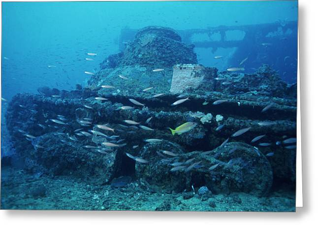 Tank From A World War II Shipwreck Greeting Card by Alexis Rosenfeld