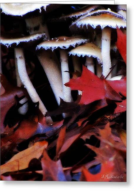 Photo Gallery Website Greeting Cards - Tappi Colorati Greeting Card by Sandy Rubini