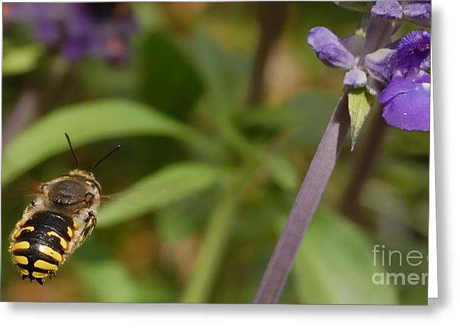 Unique Sights Greeting Cards - Target In Sight - Honey Bee  Greeting Card by Steven Milner