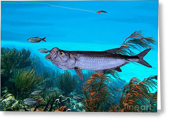 Fly Fishing Print Greeting Cards - Tarpon Greeting Card by Ralph Martens