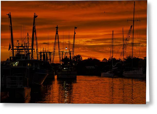 Sepia White Nature Landscapes Greeting Cards - Tarpon Springs Greeting Card by Mario Celzner