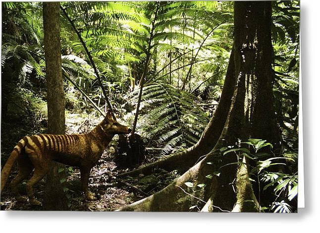 Tasmanian Greeting Cards - Tasmanian Wolf In Forest Greeting Card by Christian Darkin