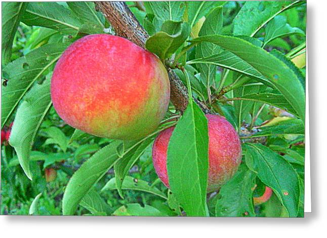 Organic Greeting Cards - Tasty Organic Plums Greeting Card by Lanjee Chee