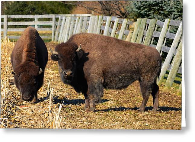 Tatanka Greeting Cards - Tatanka Greeting Card by Brian Stevens