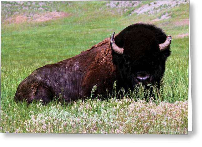 Tatanka Greeting Cards - Tatanka Greeting Card by Chris  Brewington Photography LLC