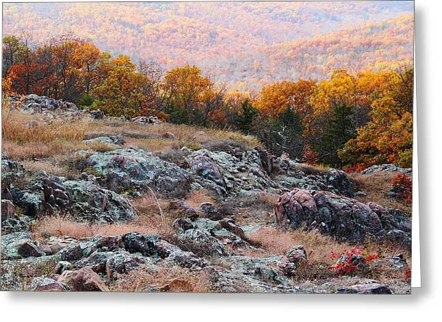 Taum Sauk Greeting Cards - Taum Sauk Mountain Glade I Greeting Card by Greg Matchick