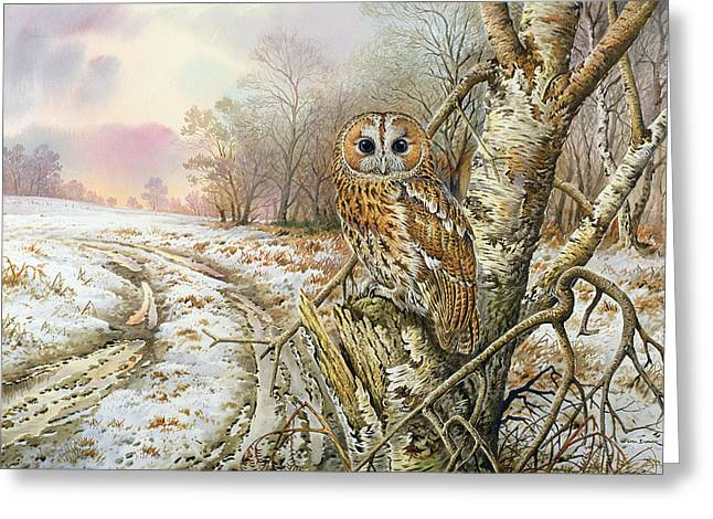 Bird Of Prey Greeting Cards - Tawny Owl Greeting Card by Carl Donner