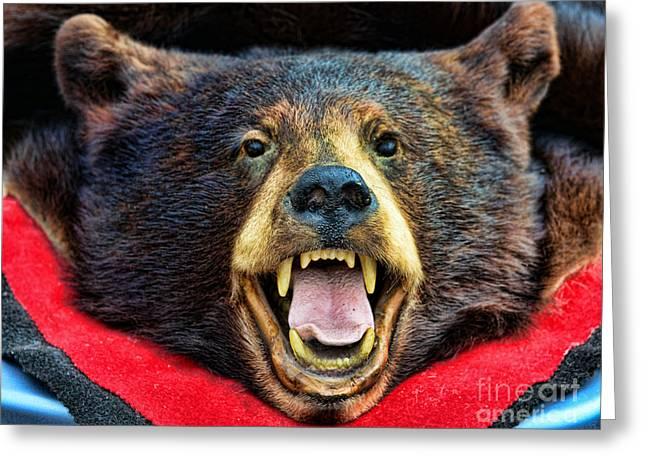 Spirt Greeting Cards - Taxidermy -  Black Bear Greeting Card by Paul Ward