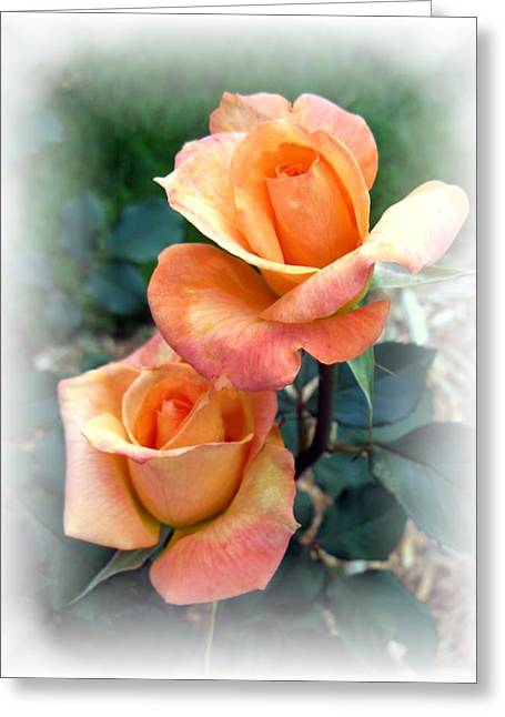 Apricot Greeting Cards - Tea for two Greeting Card by Carol Sweetwood