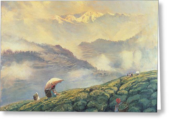 Asian Workers Greeting Cards - Tea Picking - Darjeeling - India Greeting Card by Tim Scott Bolton
