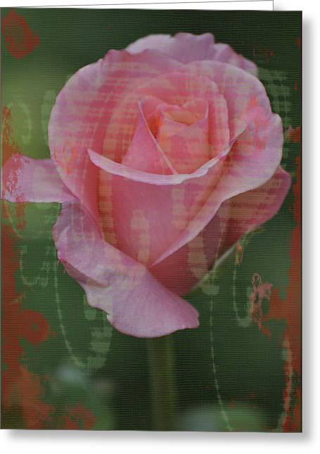 Tea Rose Greeting Cards - Tea Rose - Asia Series Greeting Card by Mary Machare