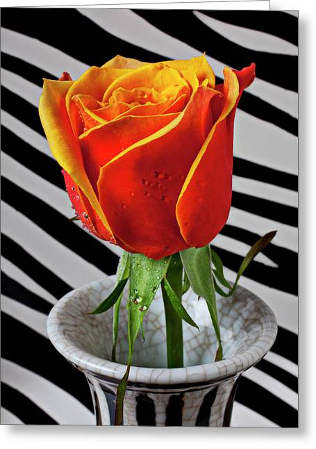 Dew Greeting Cards - Tea rose in striped vase Greeting Card by Garry Gay