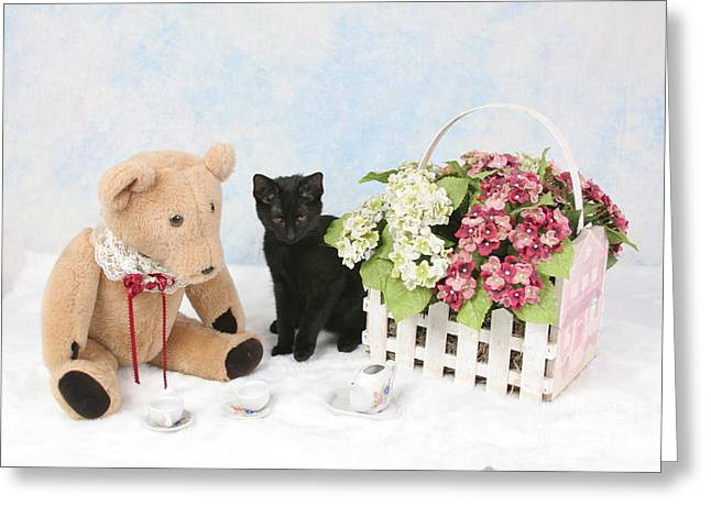 Siamese Cat Greeting Card Greeting Cards - Tea Time Greeting Card by Denise Oldridge