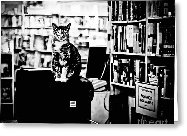 Blank And White Greeting Cards - Teacup the Bookstore Cat Greeting Card by Pam Kennedy
