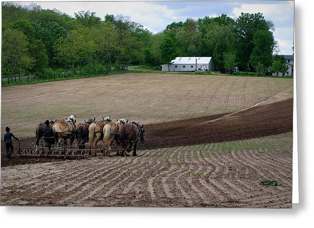 Amish Greeting Cards - Teamwork Greeting Card by Linda Mishler