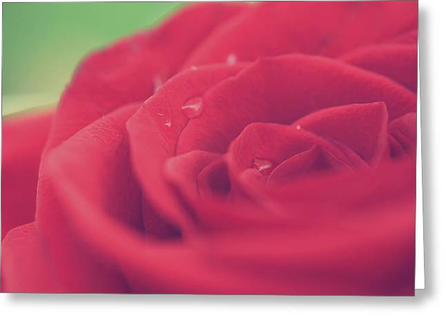 Macro Greeting Cards - Tears of Love Greeting Card by Laurie Search