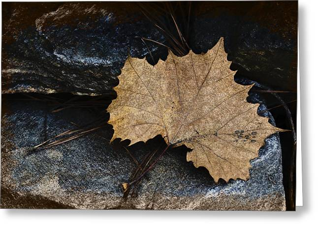 Tree Leaf On Water Digital Art Greeting Cards - Tears To Fall Greeting Card by Kelly Rader