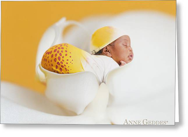 Orchids Greeting Cards - Telayiah in Moth Orchid Greeting Card by Anne Geddes