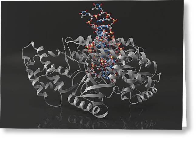 Reverse Photographs Greeting Cards - Telomerase Molecule Bound To Dna Greeting Card by Laguna Design