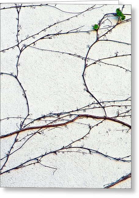 Vine Leaves Greeting Cards - Tenacity Greeting Card by Steve Harrington