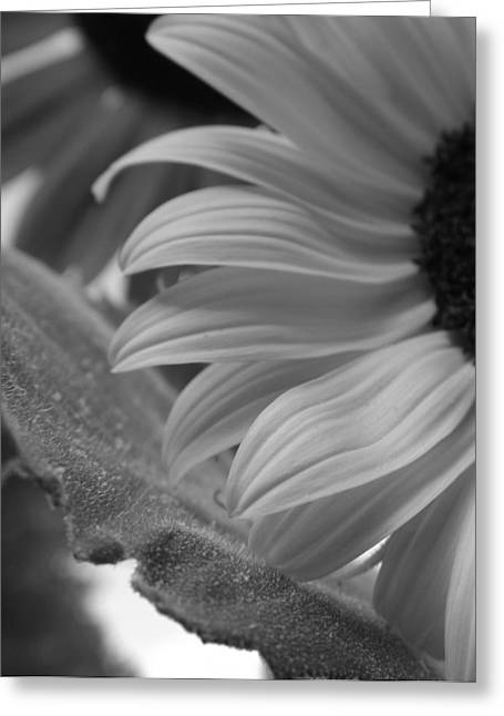 Tenderly Greeting Cards - Tenderly bw Greeting Card by Elizabeth Sullivan