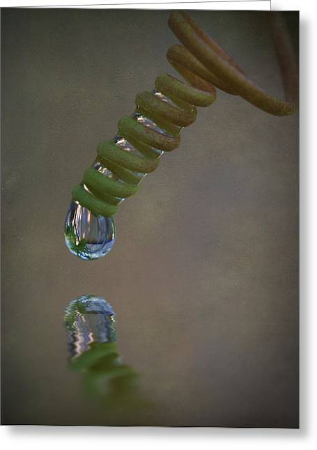 Passionfruit Greeting Cards - Tendril Droplet  Greeting Card by Kym Clarke
