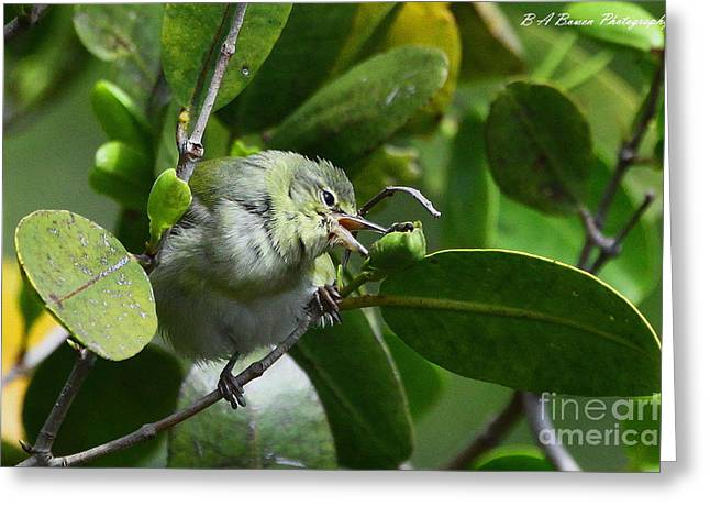Pasco County Greeting Cards - Tennesse Warbler eating Mangrove Greeting Card by Barbara Bowen