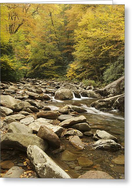 Peychich Greeting Cards - Tennessee Autumn Stream 6059 Greeting Card by Michael Peychich