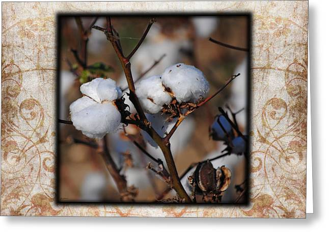 """cotton Field"" Greeting Cards - Tennessee Cotton II Photo Square Greeting Card by Jai Johnson"