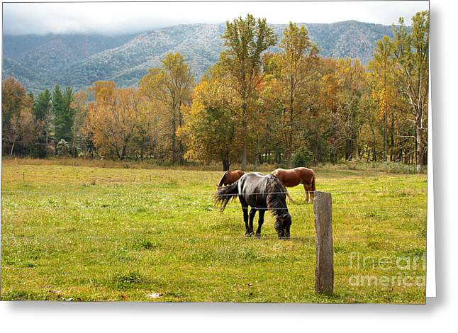 Gatlinburg Tennessee Greeting Cards - Tennessee Horses Greeting Card by Lena Auxier