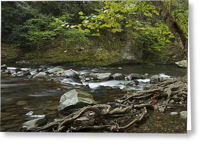 Tree Roots Greeting Cards - Tennessee Stream Panorama 6045 6 Greeting Card by Michael Peychich