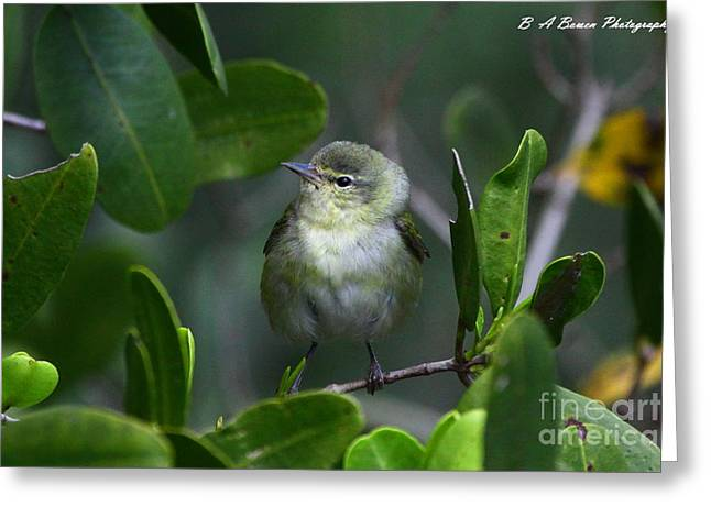 Pasco County Greeting Cards - Tennessee Warbler Greeting Card by Barbara Bowen