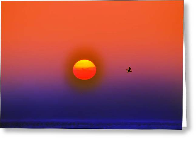 Flying Seagull Greeting Cards - Tequila Sunrise Greeting Card by Bill Cannon