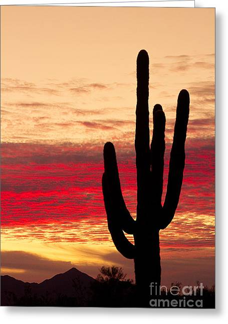 """landscape Photography Prints"" Greeting Cards - Tequila Sunrise Greeting Card by James BO  Insogna"