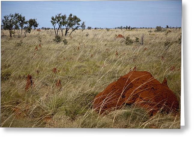 Termites Greeting Card by Carole Hinding